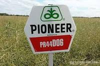 "Семена Рапса "" PR44D06 "" ( Pioneer)"