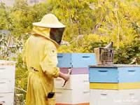 Новая жизнь пчеловодства