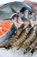 Оборудование для рыбы, морепродуктов