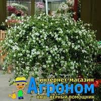 "Семена цветов Бакопа Сноутопия, однолетнее, 20 гранул, ""Садыба Центр "",  Украина"