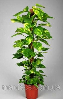 Опора-кокос для растений, 50 см