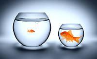 Кто круче: сравниваем свой сайт с конкурентами