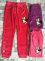 Велюровые спортивные брюки для девочек Minnie 98/104-134 p.p.