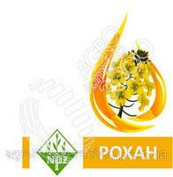Семена озимого рапса Рохан компании Лембке
