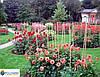 Опоры и колышки для цветов и растений Polyarm Ø 6 мм (0,5 метра)