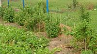 Кілочки для підв'язування низькорослих витких рослин, розсади (Polyarm) Ø 7 мм (1 метр)