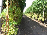 Опори і шпалери для витких рослин Polyarm Ø 12 мм (2 метри)