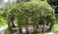 Садовая беседка из композитной арматуры Polyarm , фото 1