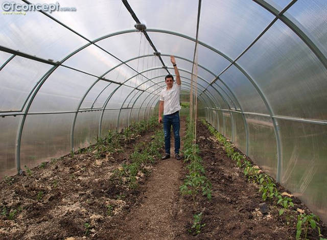 Тепличный комплекс для круглогодичного выращивания клубники 2