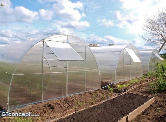 Тепличный комплекс для круглогодичного выращивания клубники 3