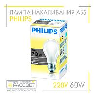 Лампа накаливания Philips Standard 60W E27 230V A55 FR 1CT/12X10F (стандартная матовая) 710Lm