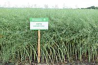 Семена озимого рапса Куга компании Лембке