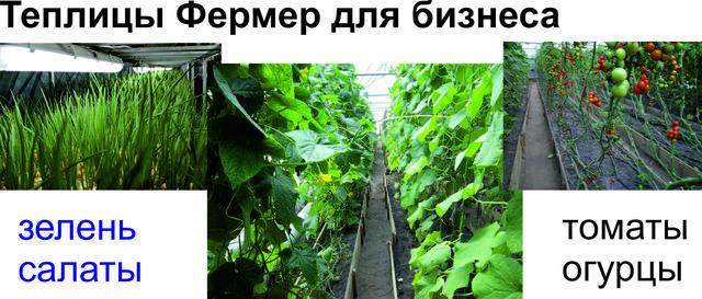 фермерские теплицы для  выращивание зелени