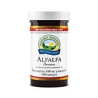 Люцерна. Alfalfa бад НСП растительный белок.