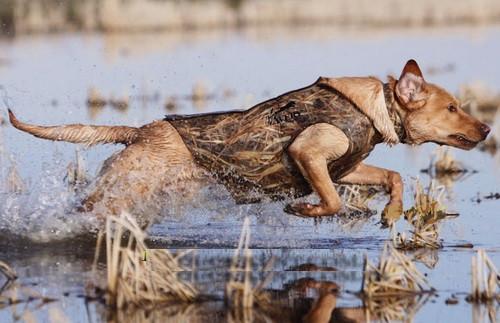 Жилет Avery Standart Dog Parka Max-5
