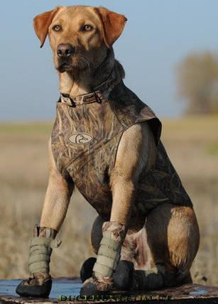 Ботинки Avery Hi Top Dog Boots S, фото 2