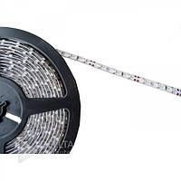 Лента LED светодиодная одноцветная, 5-6LM, 12В, 4.8 Вт, 6500K, свечение голубым, белым или красным, Led лента светодиодная