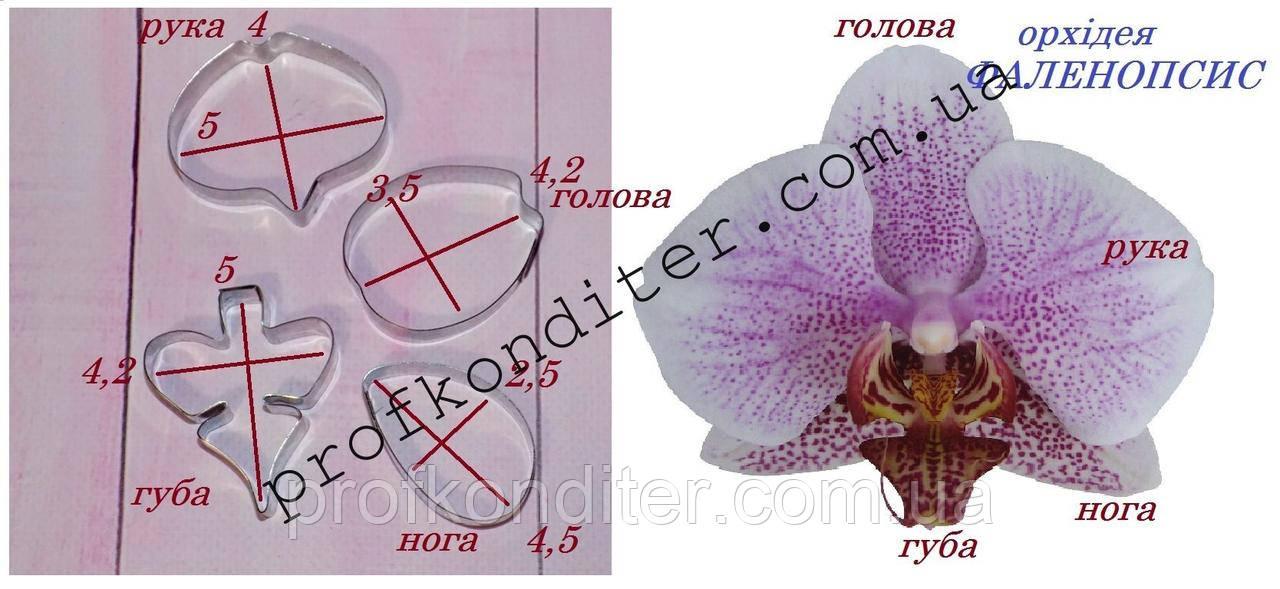 Металлическая вырубка Орхидея фаленопсис №1