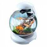 Аквариум Tetra Cascade Globe для петушка и золотой рыбки белый 6,8 литров