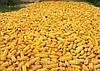 Куплю кукурузу!!!, фото 3