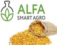 Семена кукурузы Фруктис ФАО 330