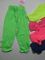 Леггинсы-бриджи трикотажные для девочек, размеры  1,2 лет, арт. CSQ-28071