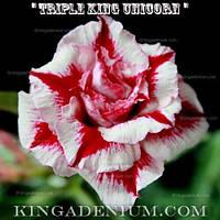 Адениум семена Triple King Unicorn