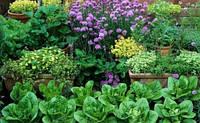 Классификация овощных растений часть 2