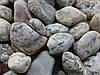Галька речная бело-серая Закарпатье