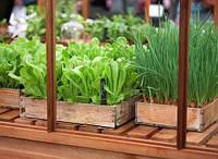 Классификация овощных растений часть 3