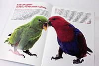 Книга Велика книжка. Папуги