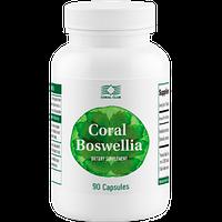 Корал Босвеллия Препятствует разрушению костно-хрящевой ткани и ускоряет ее восстановление.