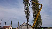 Сколько стоит спилить дерево, фото 1