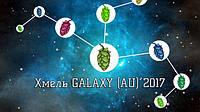 Новое поступление: Хмель Galaxy (AU) 2017г