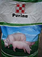 Готовый корм для свиней