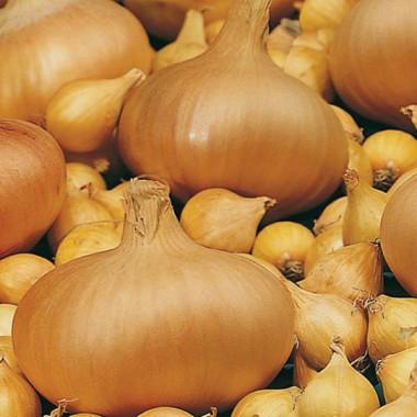 Озимый лук Сэттон 8/16 TOP Onions - 1 кг