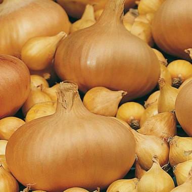 Озимый лук Сэттон 8/16 TOP Onions - 1 кг, фото 2