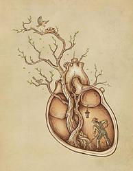 Препараты для сердца и сердечно-сосудистой системы.
