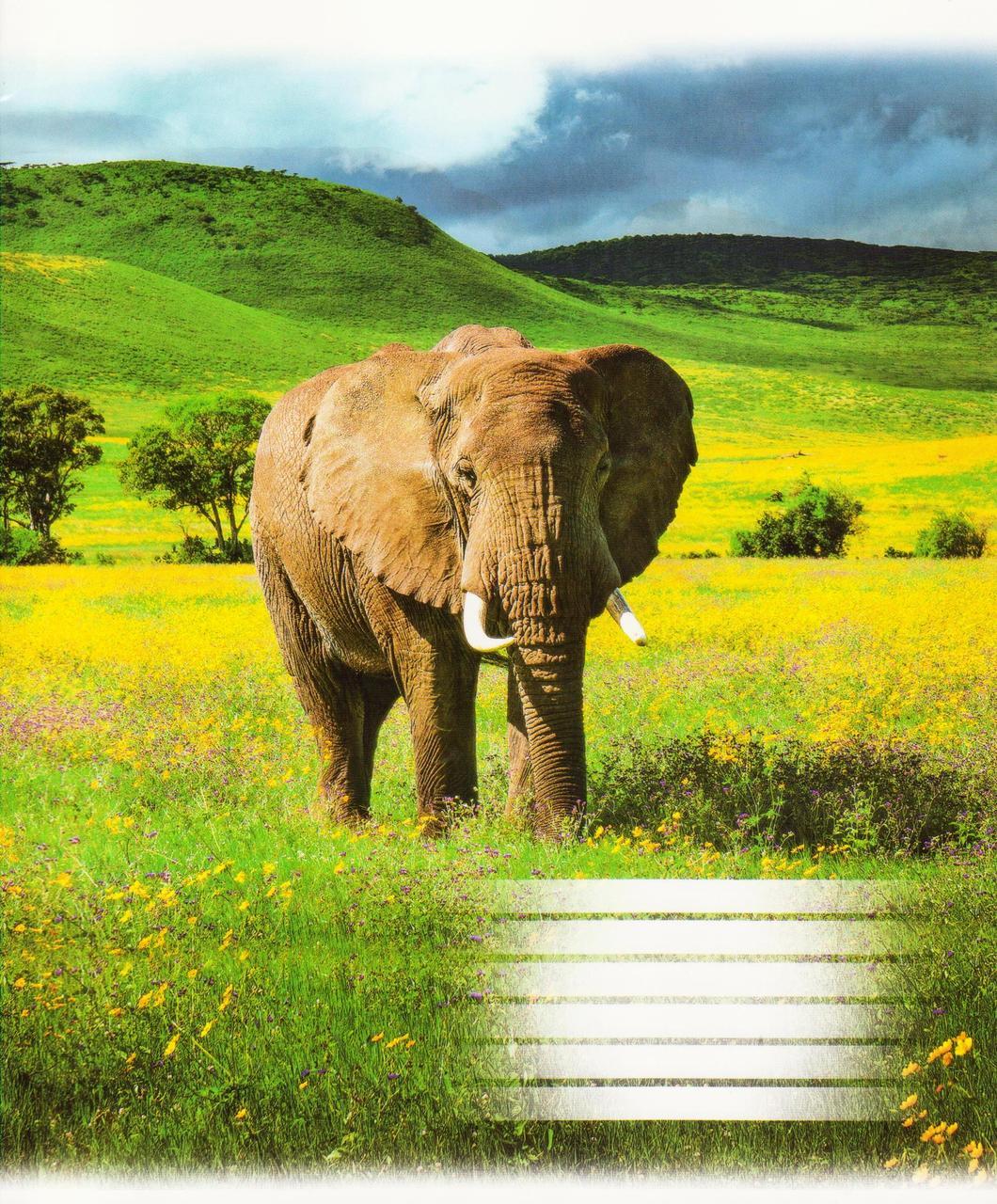 """Тетради 18 листов, линия """"Африканские животные"""""""