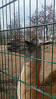 Забор из сварной сетки  Дуос 5*5*5 3*1.23, фото 1