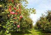 Простые правила: ключи к успехам садоводства.