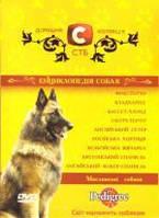 Домашня колекція СТБ: Енциклопедія собак - Мисливські собаки