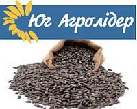Семена подсолнечника Таурус, Clearfield (109-113 дн)