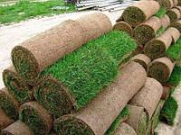 Вам нужен качественный рулоный газон-тогда мы идем к ВАМ!!!