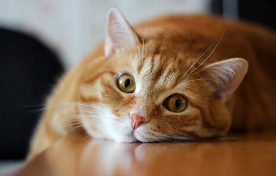 Зачем коту кастрация ?