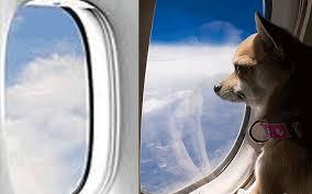 Авиаперелёт с собакой
