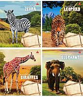 """Тетрадь 24 листа линия """"У світі тварин"""", фото 1"""