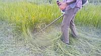 Покіс трави ціни Київ