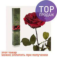 Долгосвежая роза Багровый Гранат в подарочной упаковке (не вянут от 6 месяцев до 5 лет) / цветы