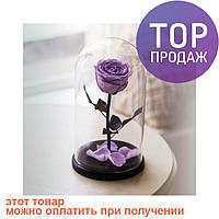 Роза в Колбе Сиреневый Жемчуг 7 карат / цветы